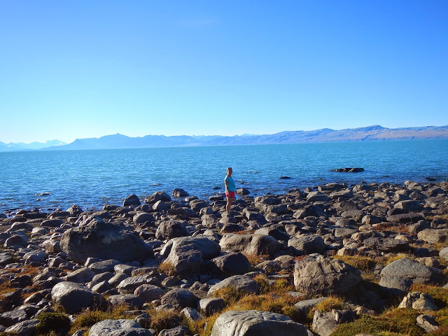 calafate lago argentino