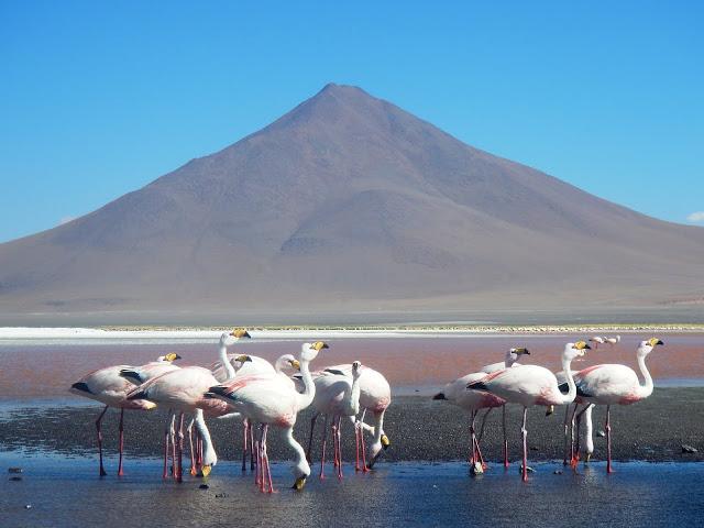 Segundo día en el Salar de Uyuni, laguna colorada