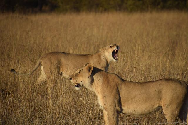 ocho dias de safari en Kenia